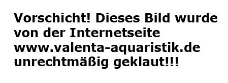 Valenta-Aquaristik - Pflanzkübel Granit 2-er Satz dunkelgrau